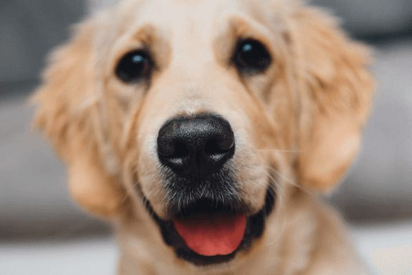 Home Vaccination for dogs