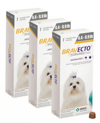 braveto for dogs small